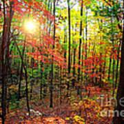 Autumn In South Carolina Poster