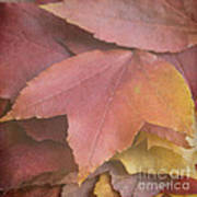 Autumn In Textures Poster