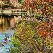 Autumn Lake And Swan Poster
