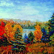 Autumn Landscape Quebec Red Maples And Blue Spruce Trees Poster