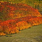 Autumn Lava Flow Poster