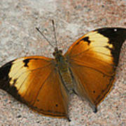 Autumn Leaf Butterfly Poster