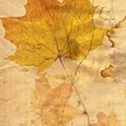 Autumn Leaf In Grunge Style Poster