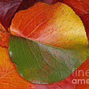 Autumn Leaf Poster