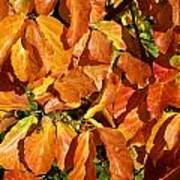 Autumn Leaves 82 Poster