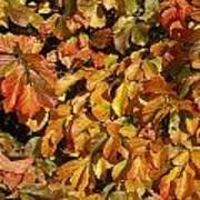 Autumn Leaves 83 Poster