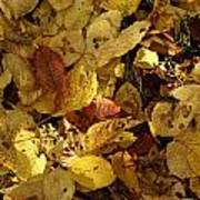 Autumn Leaves 94 Poster