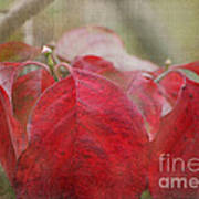 Autumn Leaves Blank Greeting Card Poster
