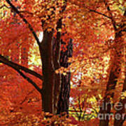 Autumn Leaves Poster by Carol Groenen