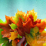 Autumn Leaves Colors Poster