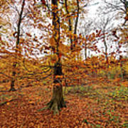 Autumn Leaves Common Wood  Poster