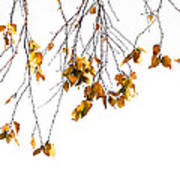 Autumn Leaves Hanging From Branch Poster