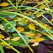 Autumn Leaves In Pond Poster