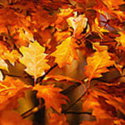 Autumn Leaves Oil Poster