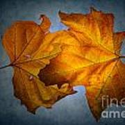 Autumn Leaves On Blue Poster