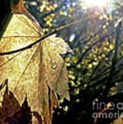 Autumn Light On Leaf Poster