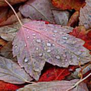 Autumn Melange Poster