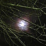 Autumn Moon Peeks Through The Branches Poster