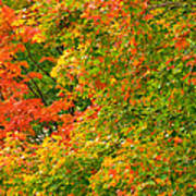 Autumn Mosaic Nj Poster