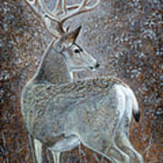 Autumn Muley Poster