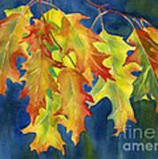 Autumn Oak Leaves  On Dark Blue Background Poster by Sharon Freeman