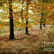 Autumn On Cannock Chase Poster