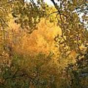 Autumn On The Bosque Poster