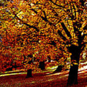 Autumn On Wombat Hill II Poster