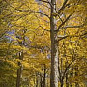 Autumn Orange Forest Colors At Hager Park No.1189 Poster