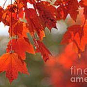 Autumn Orange Poster