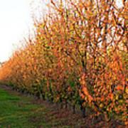 Autumn Orchard Poster