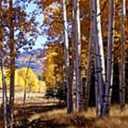 Autumn Paint Chama New Mexico Poster