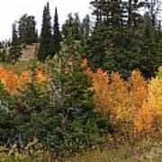 Autumn Panorama Poster