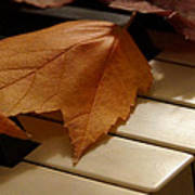 Autumn Piano 12 Poster