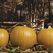 Autumn Pumpkins Poster by Amanda Elwell