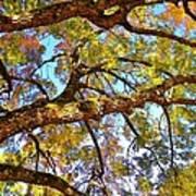 Autumn Revealed Poster