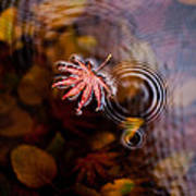 Autumn Ripples Poster by Mike Reid