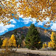 Autumn Scene Framed By Aspen Poster