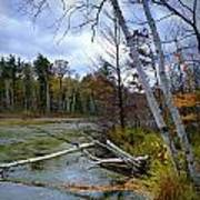 Autumn Scene Of Along The Shore Of The Platte River In Michigan Poster