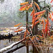 Autumn Snow Cranberry River Poster