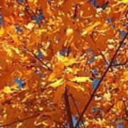 Autumn Splendor 15 Poster