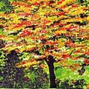 Autumn Splendor Poster by Patricia Griffin Brett