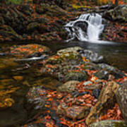 Autumn Streams In Tamworth Poster