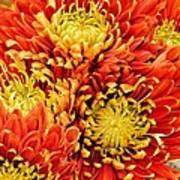 Autumn Sunrise Bouquet Poster
