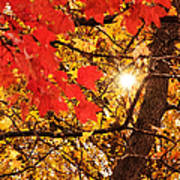 Autumn Sunrise Painterly Poster
