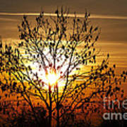 Autumn Tree In The Sunset Poster