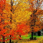 Autumn Trees By Barn Poster