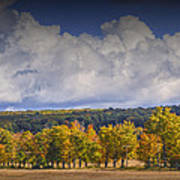Autumn Trees In A Row Poster