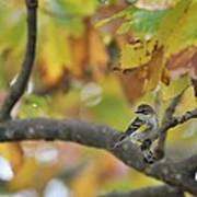 Autumn Warbler Poster