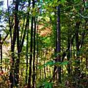 Autumn Wood Poster